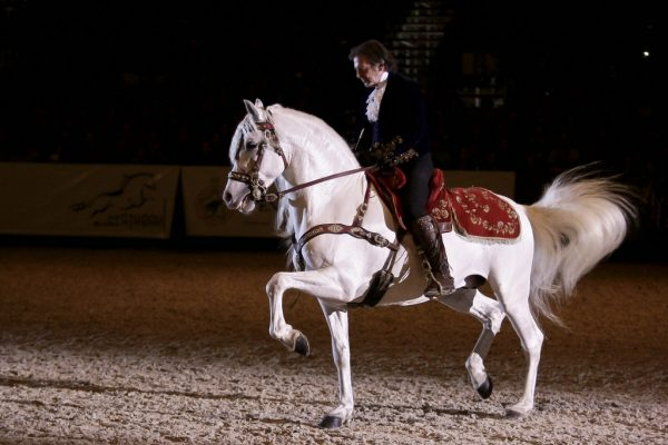 Animation evenementielle - dressage animalier - cheval - spectacle equestre - Paris, Deauville, Chantilly, Longchamps, Ile de France
